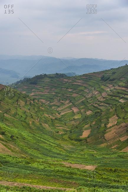 Africa- Uganda- terraced fields