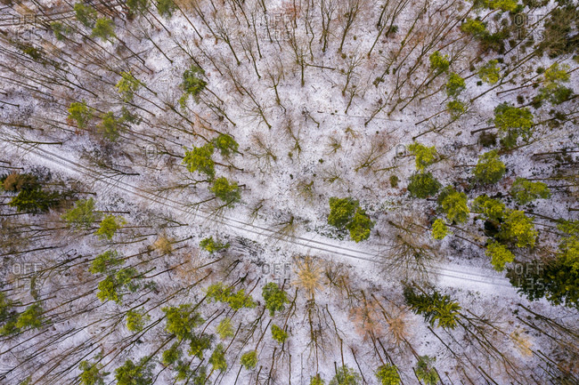 Germany- Baden-Wuerttemberg- Rems-Murr-Kreis- Swabian forest- Aerial view of forest in winter