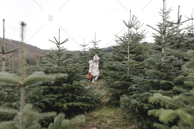 Girl carrying basket on a Christmas tree plantation