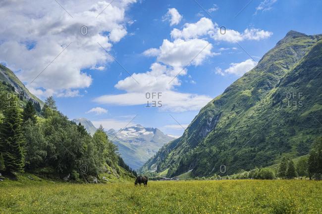 Horse grazing in idyllic, scenic mountain valley, Innergschloess, Tyrol, Austria
