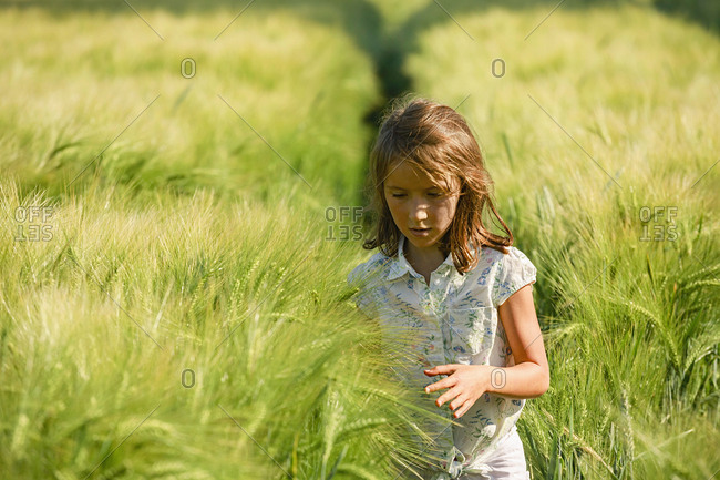 Curious girl walking in sunny, idyllic rural green wheat field