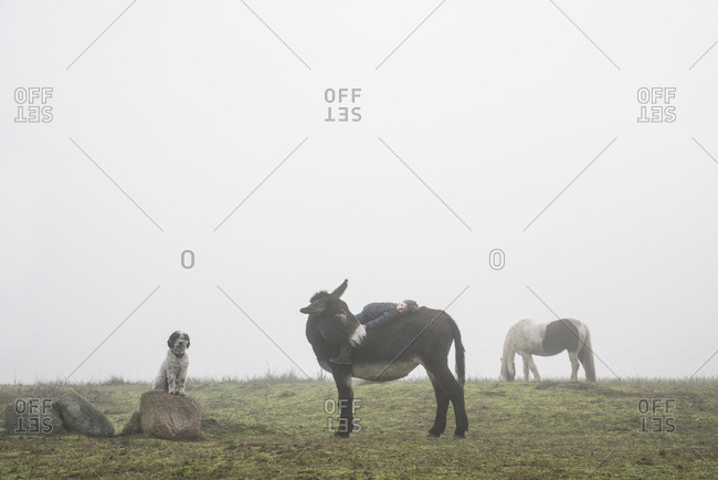 Girl laying on back of donkey in rural field
