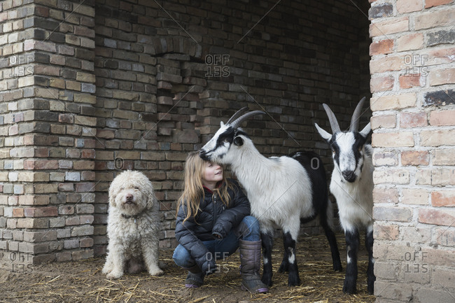 Girl with goats and dog in barn doorway