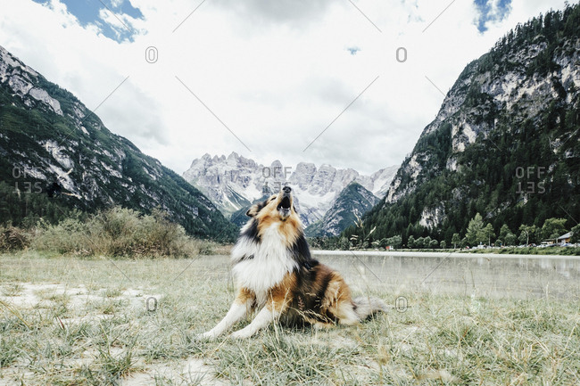 Dog barking in valley below mountains, Dried Zinnen Nature Park, South Tyrol, Italy