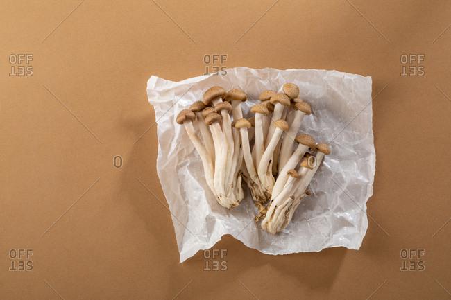 Bundle of fresh mushrooms