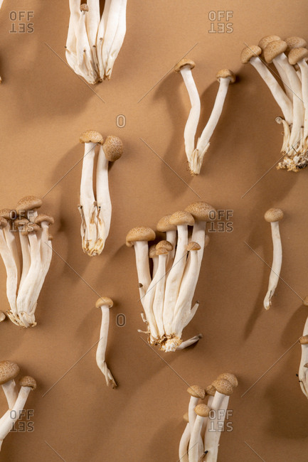 Japanese mushrooms