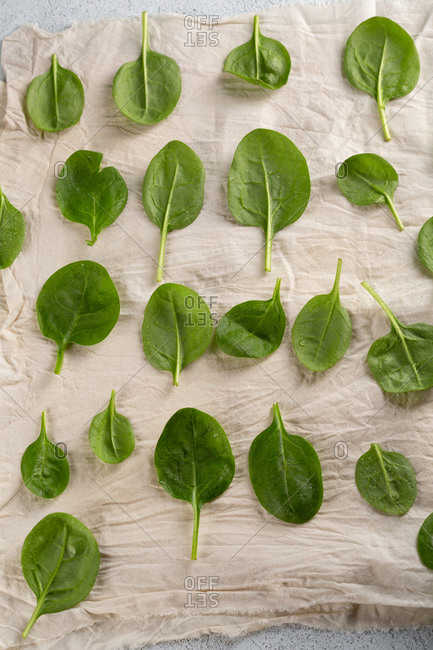 Spinach laid on cloth