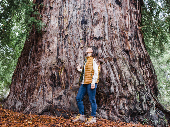 Full length of woman standing next to large redwood tree