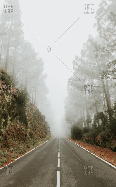 Asphalt road in foggy forest