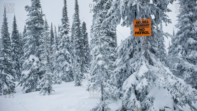 Wonderful view of coniferous forest between snowdrift and warning sign with ski area boundary words in winter in Canada