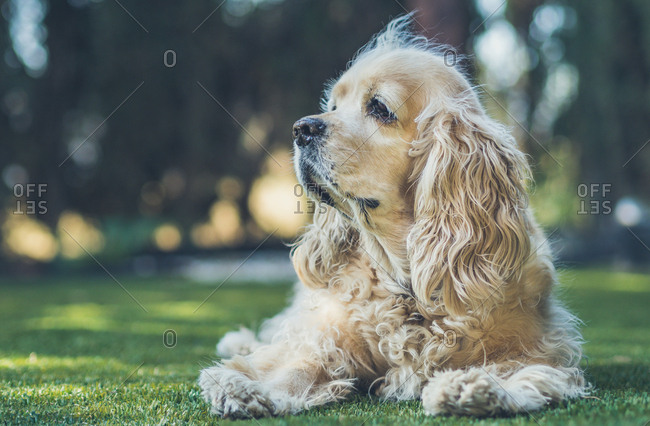 Funny dog lying on ground between plants