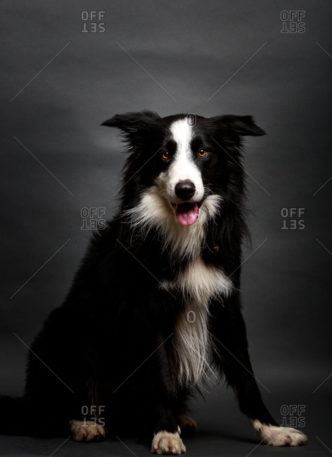 Amazing dog staring at camera