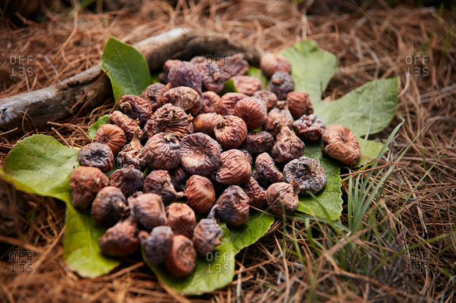 Closeup of pile of dried fruit of fig on green leaf on ground