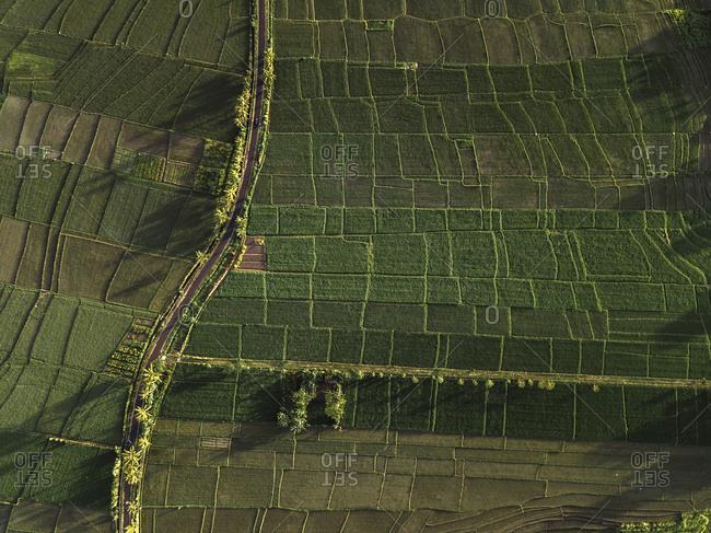 Aerial view of rice fields,Ubud,Bali