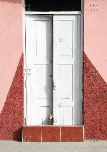 Dog peeking out from a doorway in Trinidad, Cuba