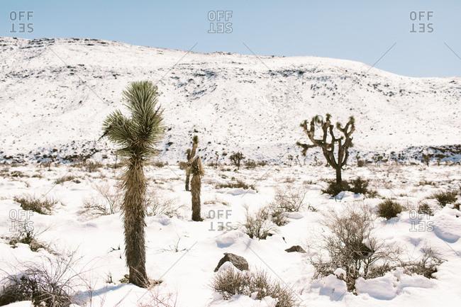 Snowy desert landscape