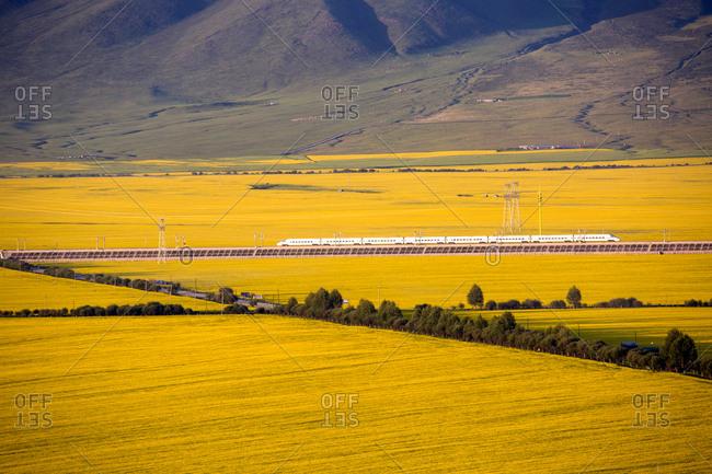 Qinghai province doors sources rape field