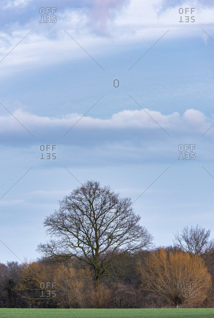Bare trees in the country under cloudy blue sky