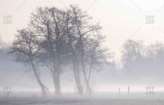 Trees surrounded by fog at dawn