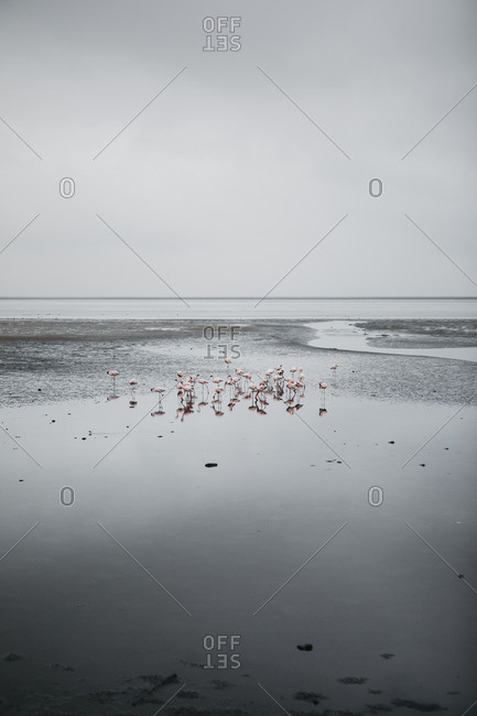 Namibia- Walvis Bay- flamingos in the sea