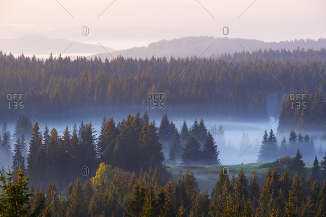 Montenegro- Durmitor National Park-forest in morning mist- view from Curevac