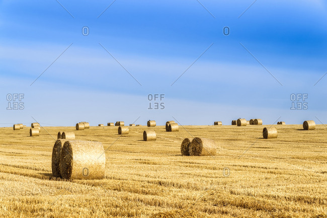 United Kingdom- Scotland- East Lothian- field and hay bales in the evening light
