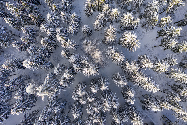 Germany- Hesse- Taunus- Aerial view of coniferous forest in winter