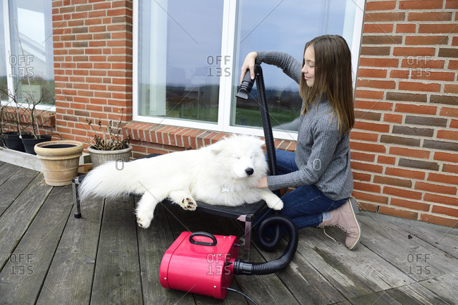 Girl blow-drying white dog on terrace
