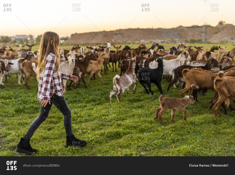 Girl herding a goat herd stock photo - OFFSET