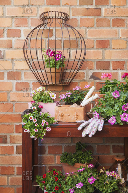 Various potted spring and summer flowers- gardening tools and gloves
