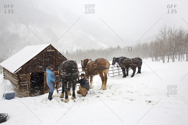 March 16, 2013: USA, Colorado, Aspen, wranglers get horses ready for the sleigh ride at the Pine Creek Cookhouse, Ashcroft