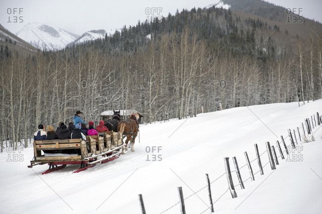 March 16, 2013: USA, Colorado, Aspen, horses pull a sleigh full of people through the Elk Mountains up to the Pine Creek Cookhouse for dinner, Ashcroft