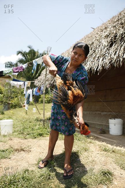 April 20, 2012: BELIZE, Punta Gorda, Toledo District, Desiree Mes kills and prepares a chicken for lunch, San Jose Maya Village