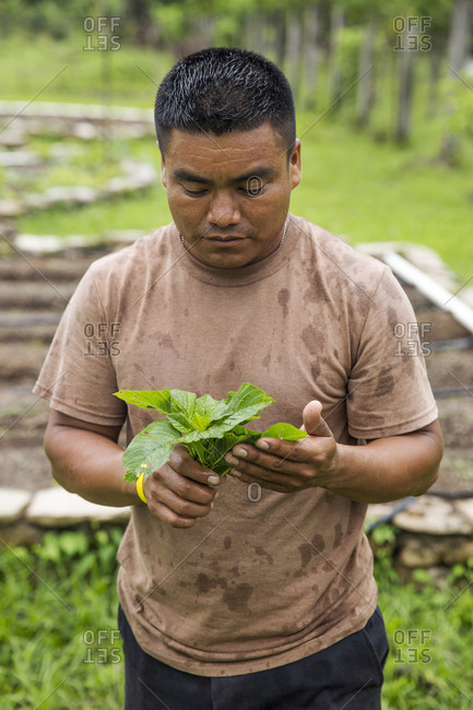 May 30, 2014: BELIZE, Punta Gorda, Toledo, Belcampo Belize Lodge and Jungle Farm offers a a farm to table cuisine supplied by their own organic farm, they do their best to offer a real experience of Belize flavors