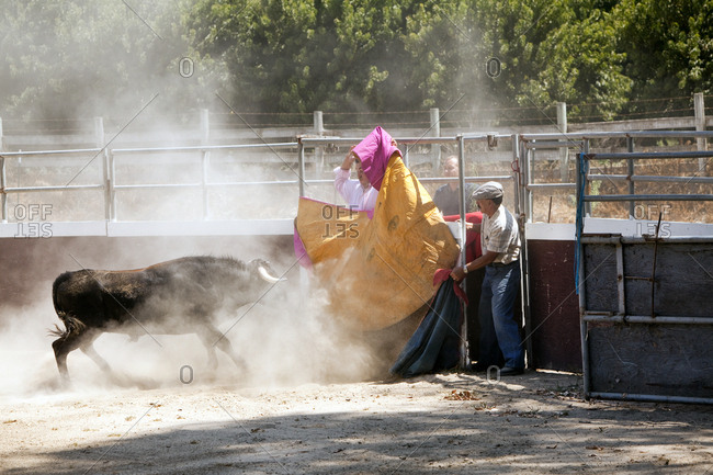 August 25, 2010: USA, California, fighting a bull at the Dennis Borba bullfighting school in Escalon