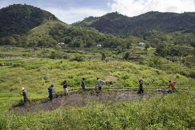 July 15, 2013: INDONESIA, Flores, residents of Waturaka Village prepare their fields to plant rice