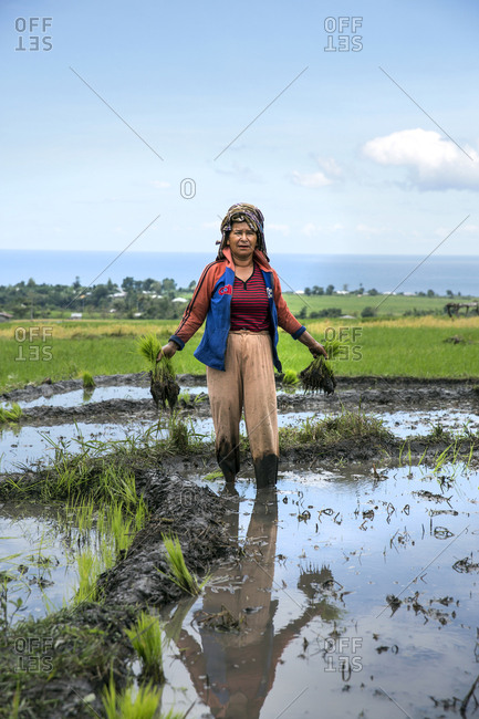 July 19, 2013: INDONESIA, Flores, portrait of a woman holding up rice shoots in a field in Narang village