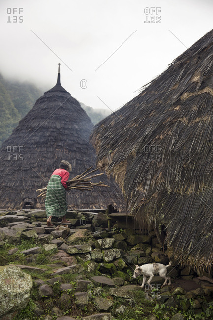 July 20, 2013: INDONESIA, Flores, Wae Rebo Village, an elder woman Safro Subagio carries wood into her conical home known as a Mbaru Niang