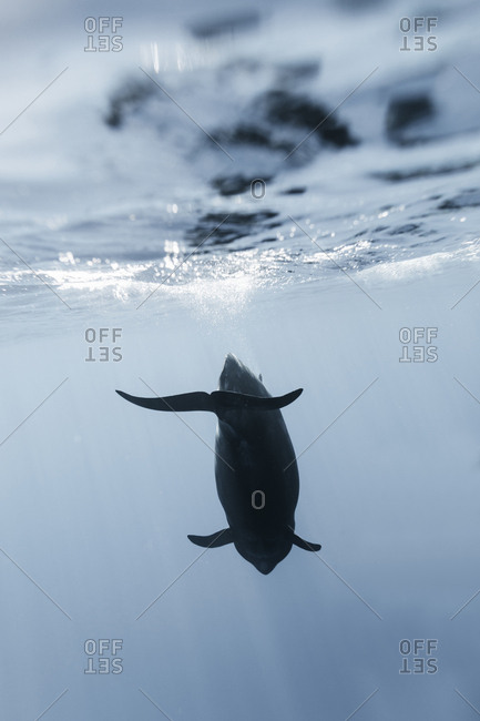 underwater image of whale swimming