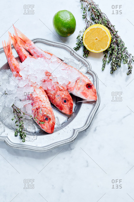 Red mullet on the ice beside ingredients