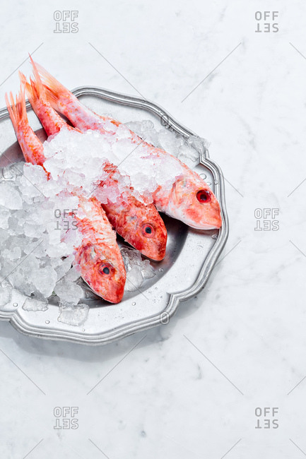 Red mullet on the ice