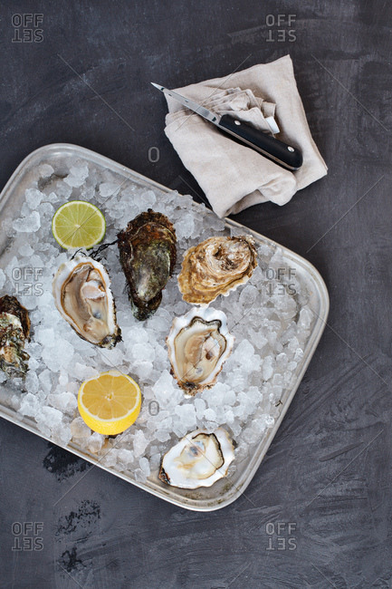 Oysters chilling on ice on a metal tray
