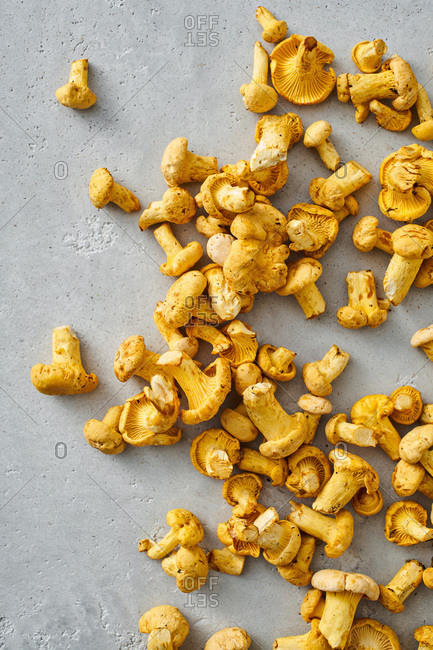Bunch of chanterelles on gray background