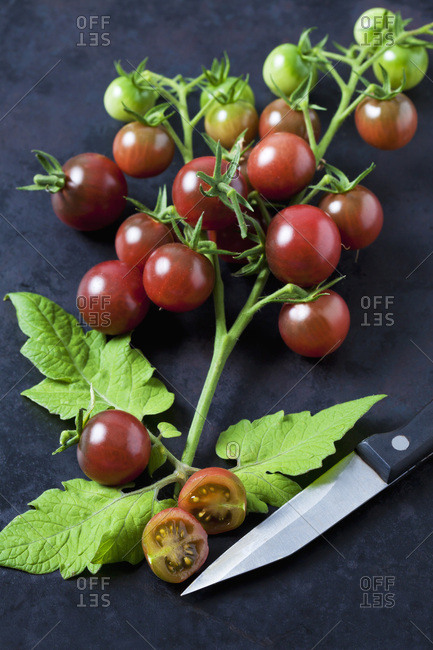 Ripe tomatoes 'Black Cherry'- leaves and kitchen knife on dark ground