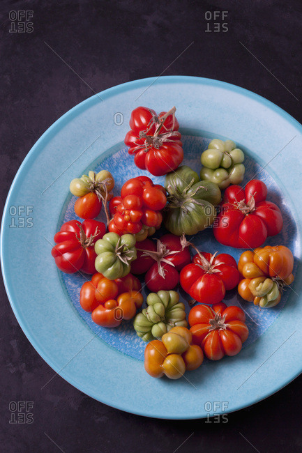 Cherry tomatoes 'Voyage' on light blue plate
