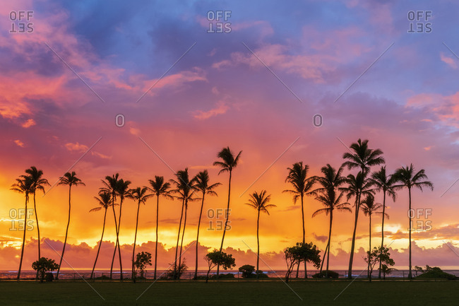 USA- Hawaii- Kauai- Pacific Ocean- Kapa'a Beach Park- palms at sunrise