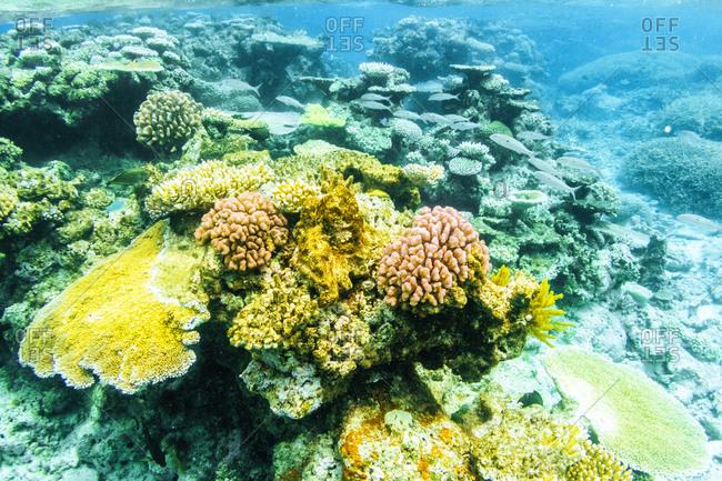 Australia- Queensland- Great Barrier Reef- Corals- close up