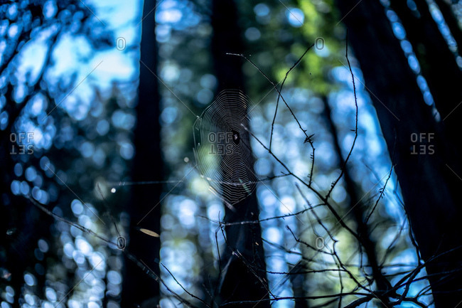 Spider web on tree branches