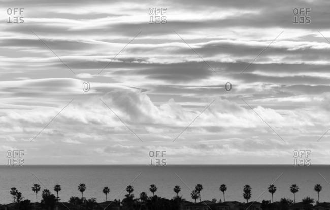 California beach and palm trees