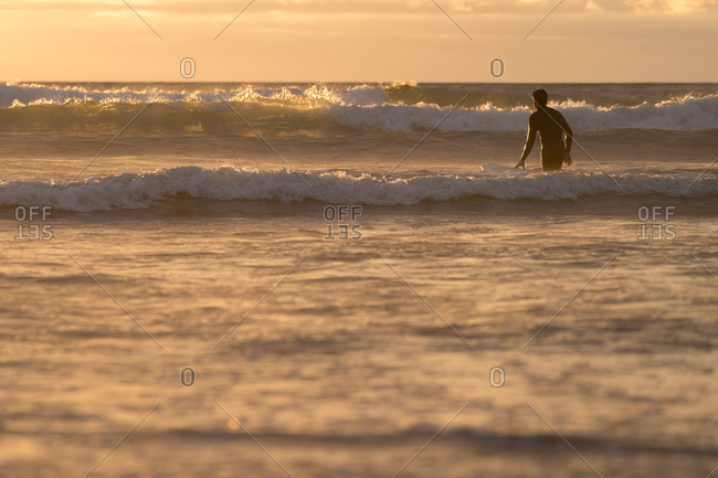 Male surfer heading towards waves in golden sunset